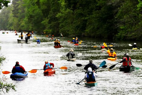 camden county dismal swamp kayak race
