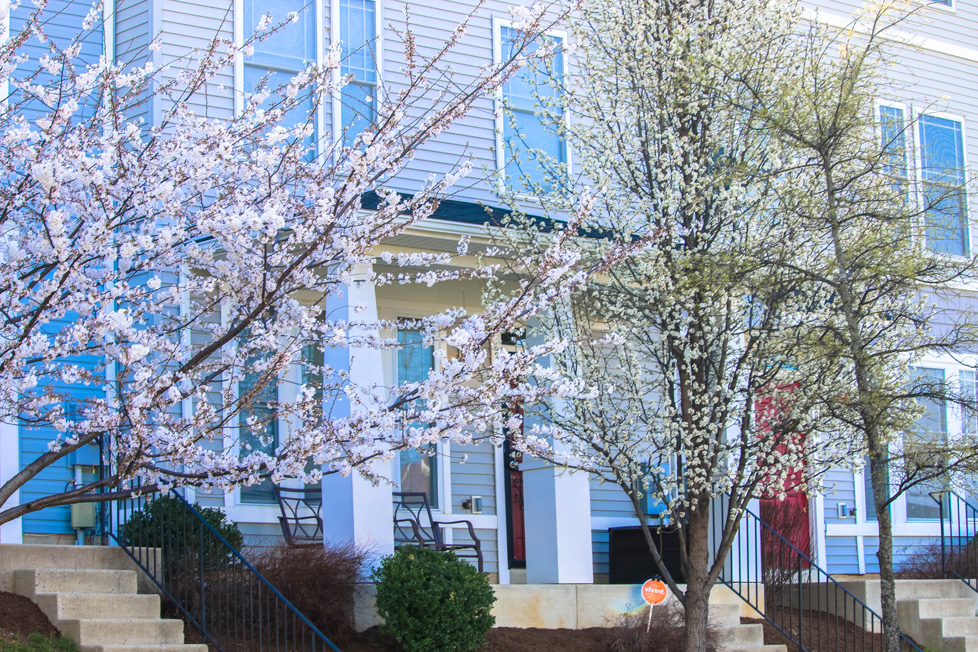 Congress Heights, Cherry Blossoms House