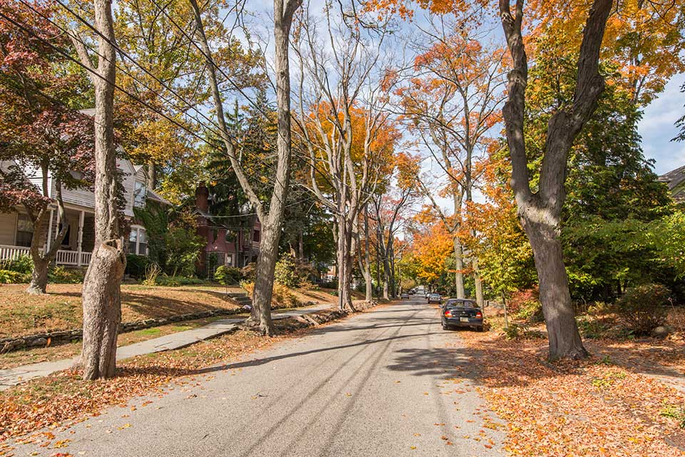 Tree-lined residential street in Mt. Airy, Philadelphia, PA